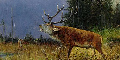 ''Wie der Hirsch lechzt ...'' - Psalm 42